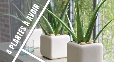 4 depolluting plants for your home